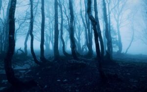Hoia Baciu Forest, Transylvania, Romania