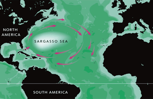 Sargasso sea currents
