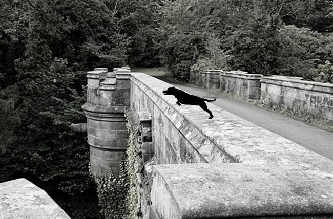 Overtoun bridge aka dog suicide bridge