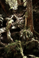 Aokigahara – The infamous 'suicide forest' of Japan 4