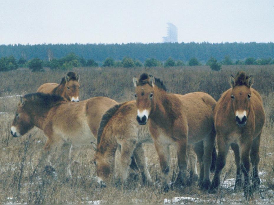 Chernobyl disaster photo.