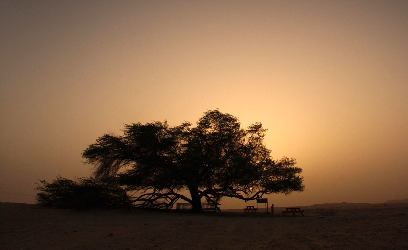 Mysterious Tree of Life in Bahrain