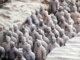 Emperor Qin's terracotta warriors – An army for the afterlife 2