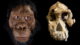 Little Foot: An intriguing 3.6 million years old human ancestor 4
