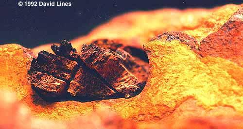 The London Hammer - Συναρπαστικό OOPArt 400 εκατομμυρίων ετών! 5