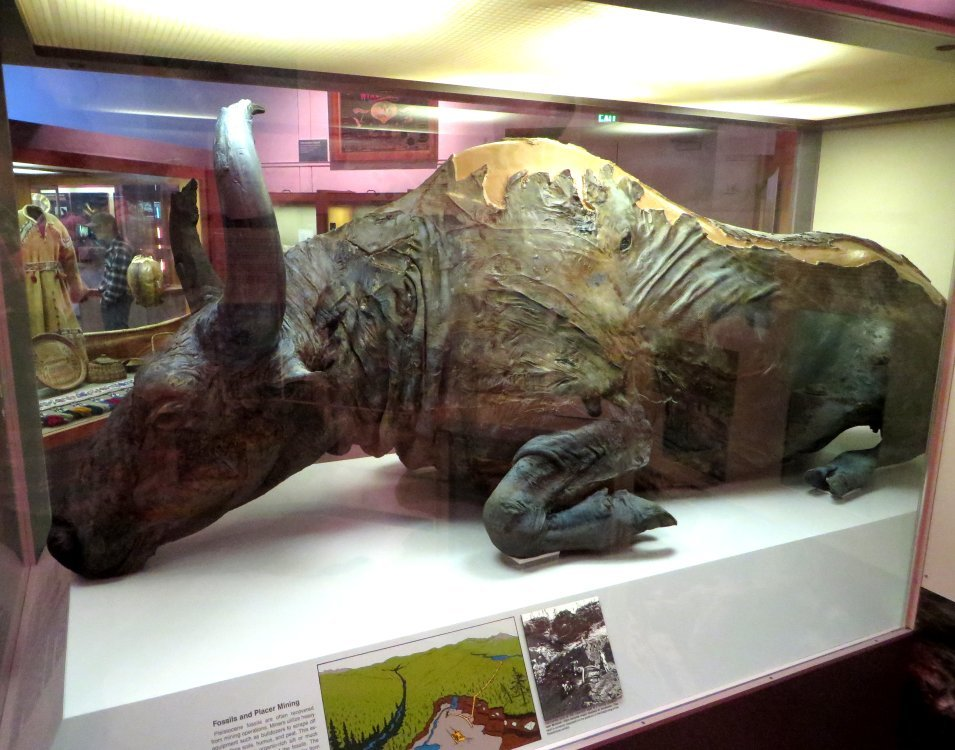 Forezen in time: 8 most well-preserved fossils ever discovered 7