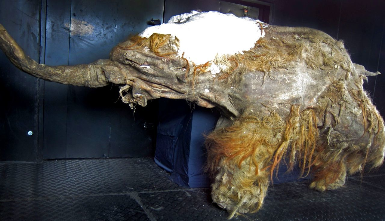 Forezen in time: 8 most well-preserved fossils ever discovered 10