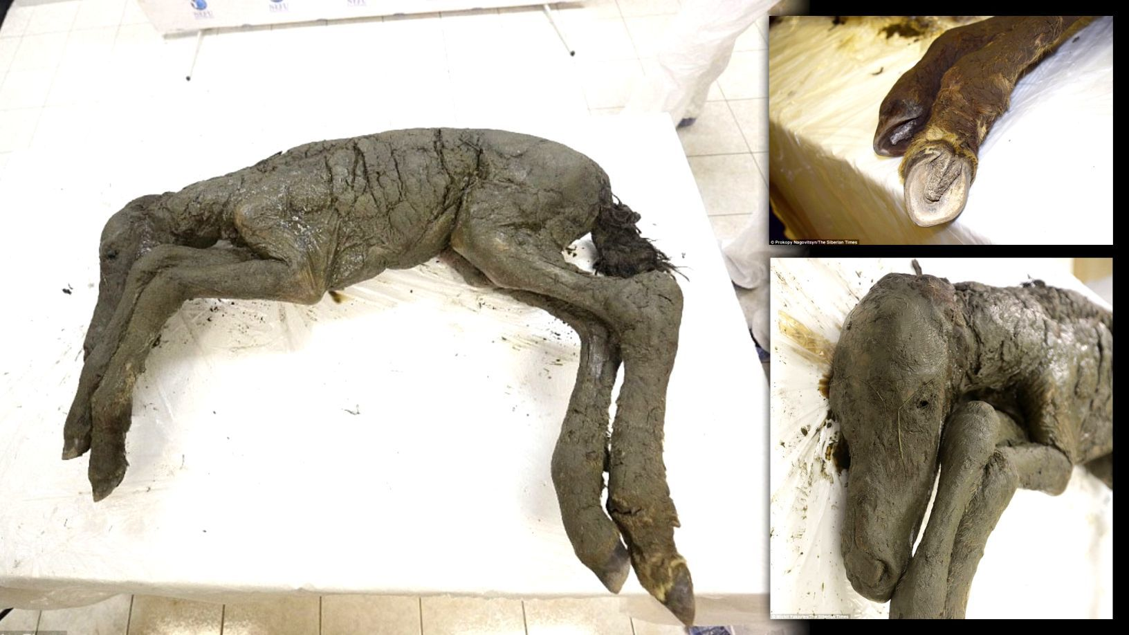 Forezen in time: 8 most well-preserved fossils ever discovered 9
