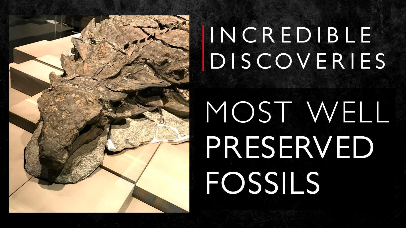 Forezen in time: 8 most well-preserved fossils ever discovered 4