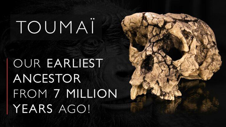 toumai-sahelanthropus