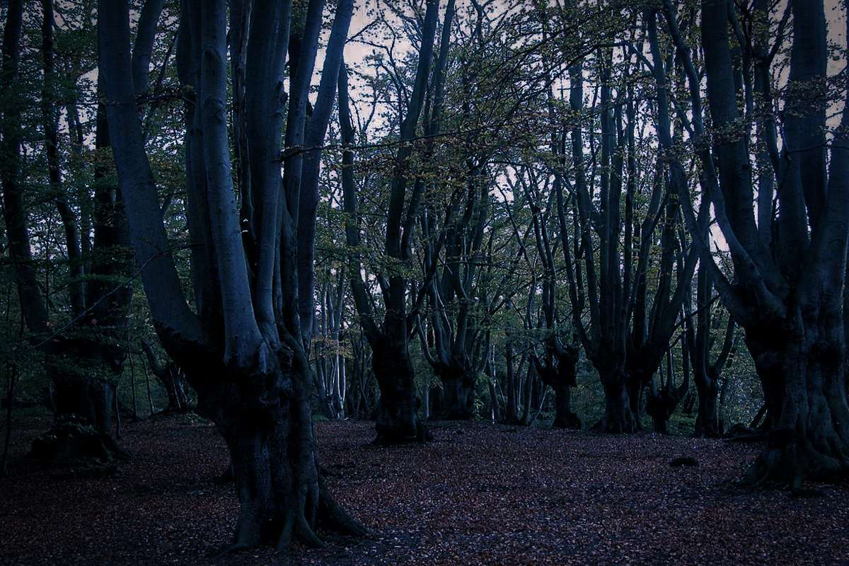 Epping Forest, Essex-London, England