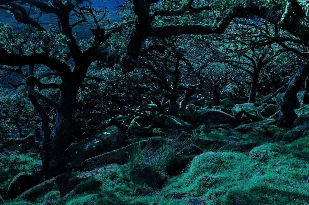 Witches Wood, Lydford Gorge, Devon, England
