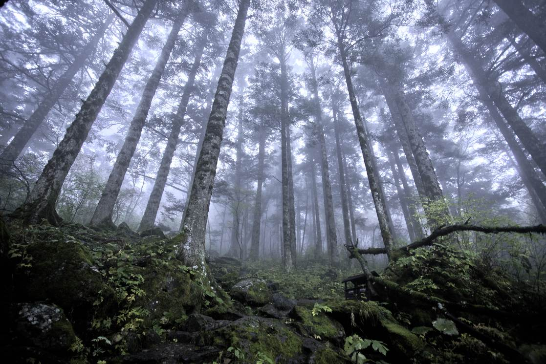 Maagdelijk bos Shennongjia China
