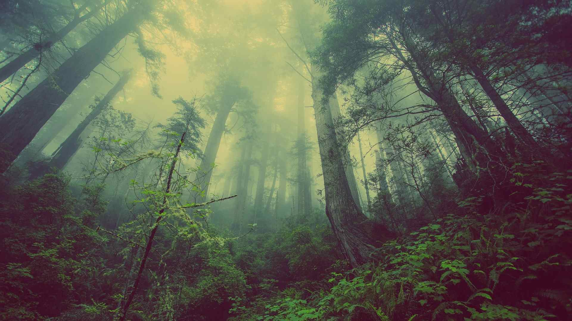 Wychwood Forest, Oxfordshire, England