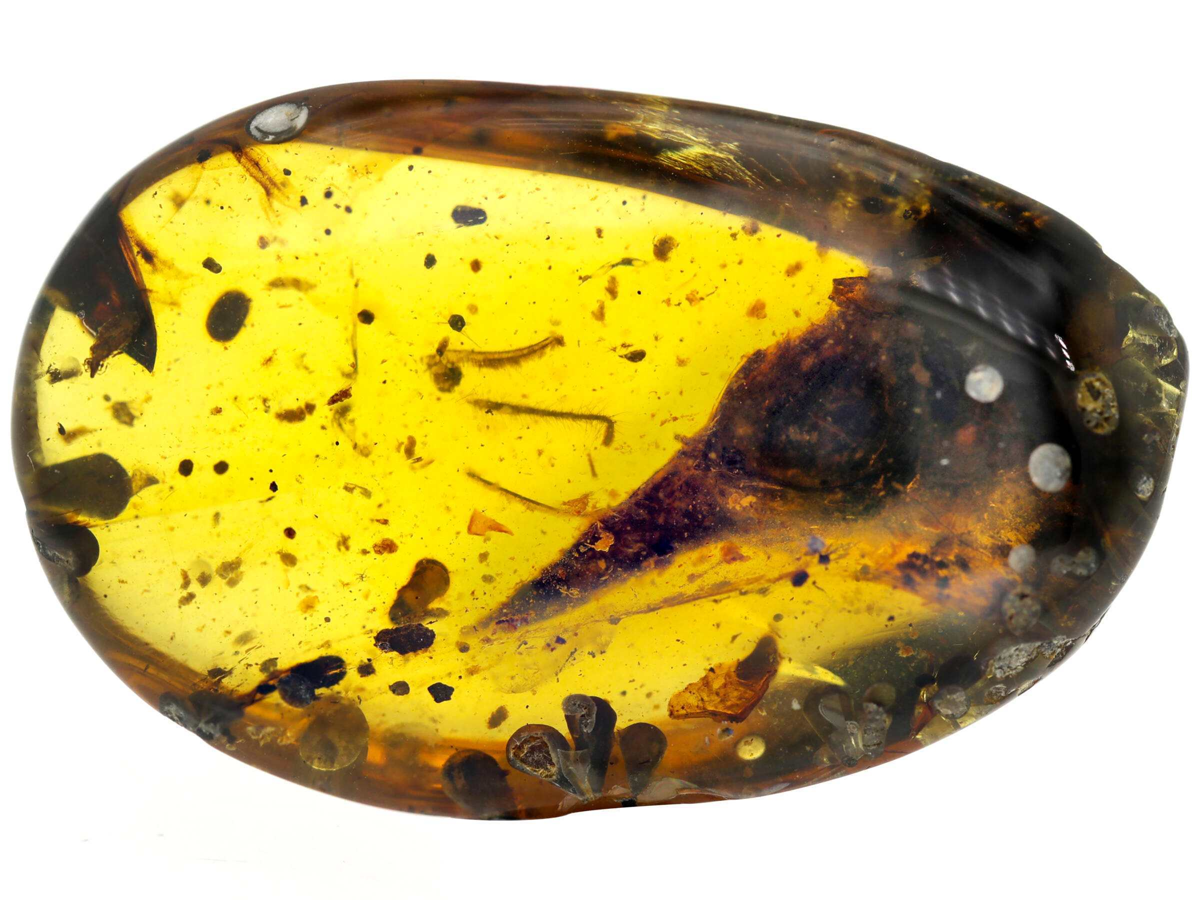 Burmese amber with Oculudentavis skull nearly perfectly preserved inside.