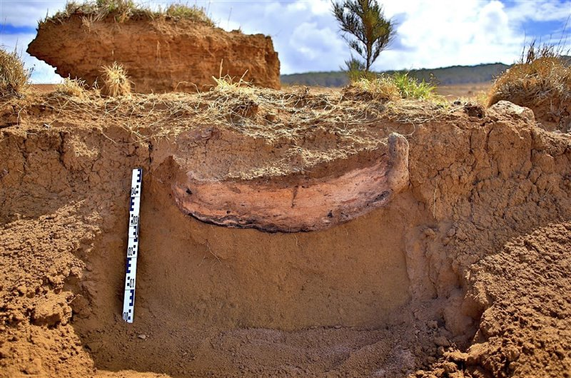 Rapanui Society continued after the deforestation of Easter Island 4