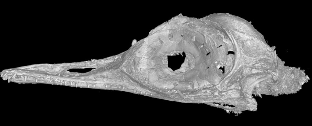 An image from a CT scan of the smallest dinosaur skull. Photo: Li Gang / China University of Geosciences