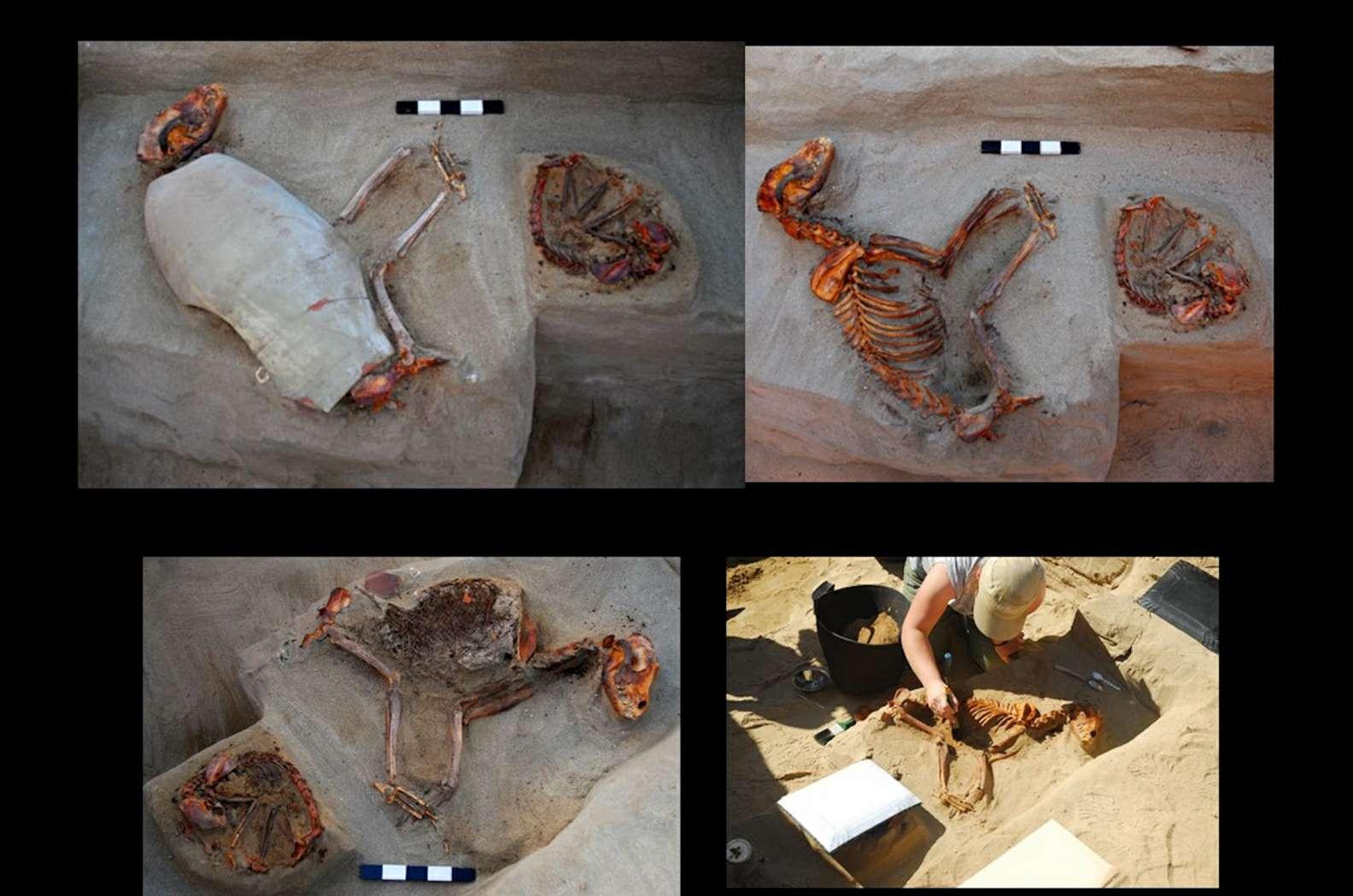 Αυτά τα αρχαία αιγυπτιακά σκυλιά θάφτηκαν σε κεραμικά αγγεία.