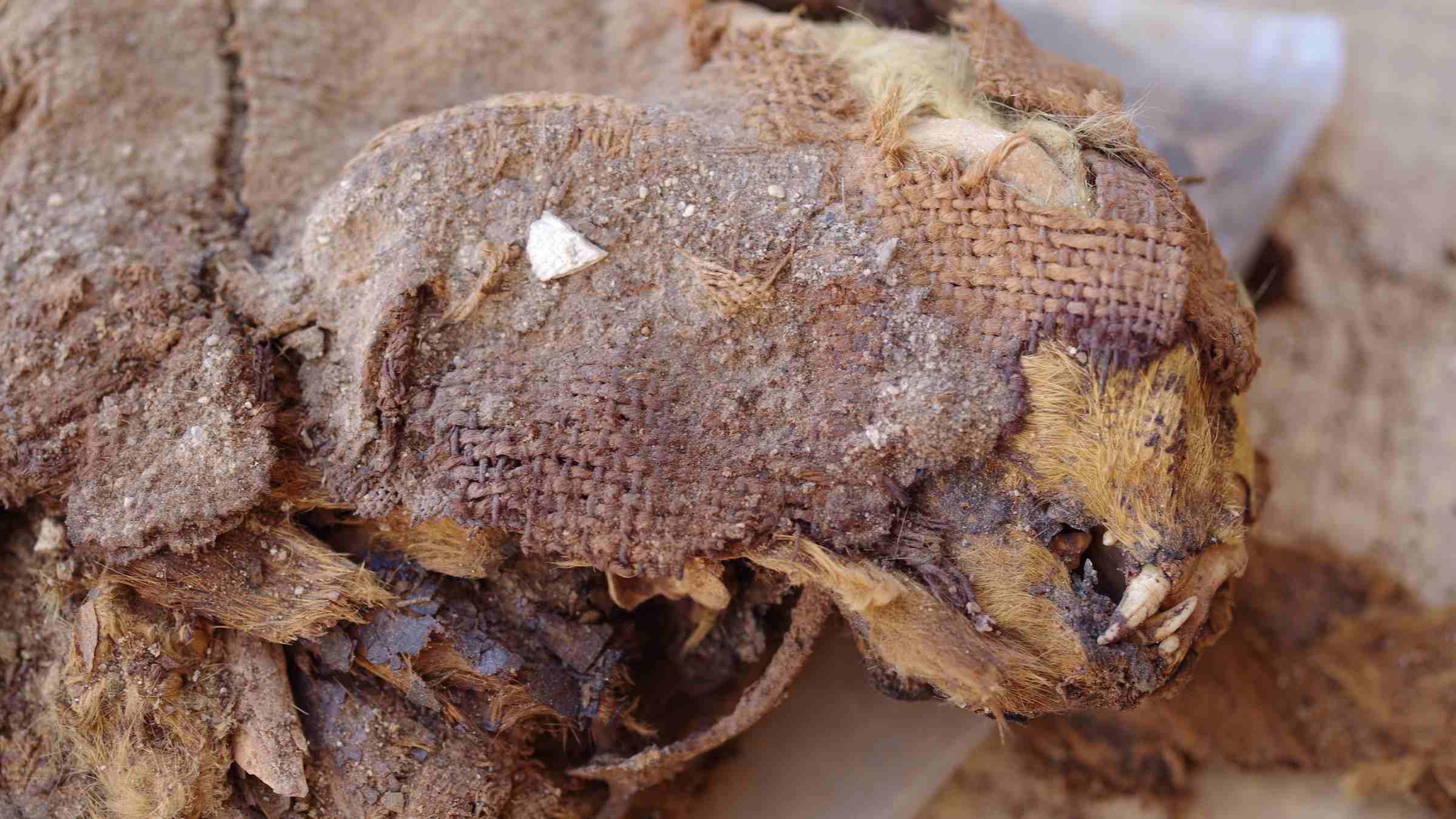 Η ξηρή αιγυπτιακή έρημος συντήρησε τα ερείπια αυτής της γάτας θαμμένη σε κουβέρτα