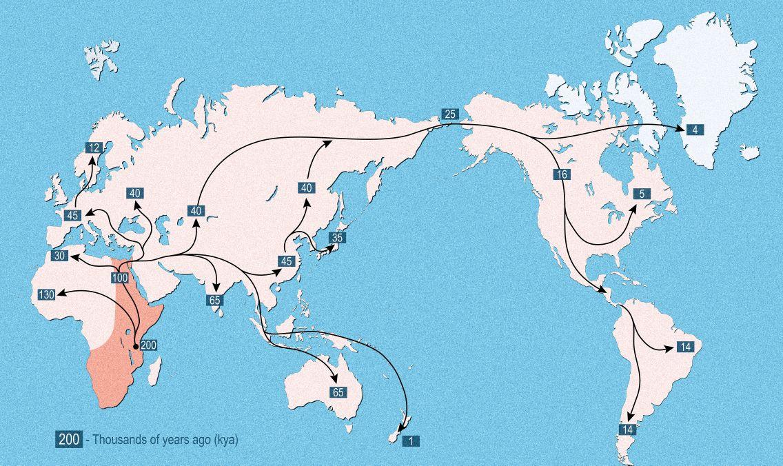 Vroege menselijke expansie vanuit Afrika over de hele wereld, migratiepaden afgebeeld met pijlen, wereldwijde expansie met bewegingsrichting en tijd van vestiging op de continenten. © Designua | Gelicentieerd van DreamsTime Stock Photos