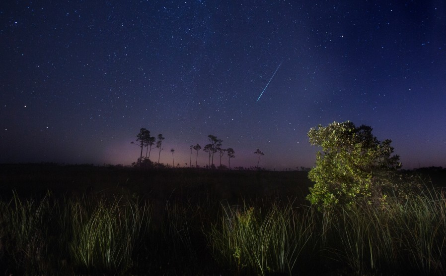 Floria Everglades dt-106818434
